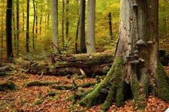 Herbststimmung-DSC_0234.jpg